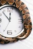 Reptiles on white background Royalty Free Stock Photo