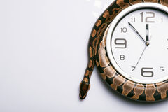 Reptiles on white background Stock Photography