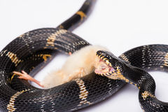 Reptiles on white background stock photo