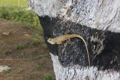 Reptiles Royalty Free Stock Photos