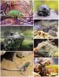 Reptiles y anfibios foto de archivo libre de regalías