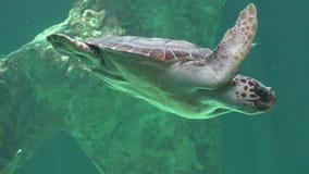 Reptiles y tortugas de mar Foto de archivo