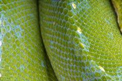 Reptileskin Royalty Free Stock Image