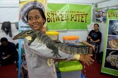 Reptilfans Fotografering för Bildbyråer