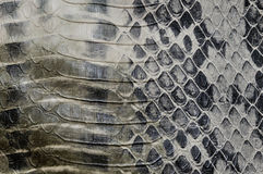 reptilhudorm Arkivbilder