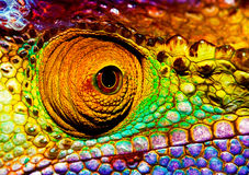 Reptilian eye. Photo of colorful reptilian eye, closeup head part of chameleon, multicolor scaly skin of lizard, african animal, beautiful exotic iguana, wild royalty free stock images