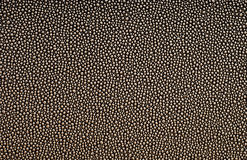 Free Reptilian Texture Stock Images - 55237584