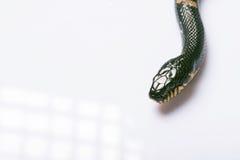 Reptilien auf weißem Hintergrund Stockbild