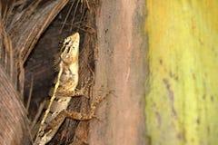 Reptilien von Sri Lanka lizenzfreies stockbild