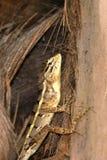 Reptilien von Sri Lanka stockfotos