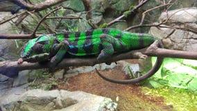 RepTopia au zoo de Singapour photographie stock libre de droits