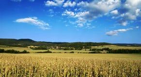 repubblica ceca del papavero di paesaggio del campo Immagini Stock