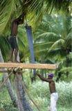 REPUBBLICA DOMINICANA DEL MARE DELL'AMERICA CARIBBIAN Immagine Stock Libera da Diritti