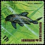 REPUBLIC OF BURUNDI - CIRCA 1974: postage stamp, printed in Burundi, shows a fish Angel Squeaker Synodontis angelicus. REPUBLIC OF BURUNDI - CIRCA 1974: a Royalty Free Stock Photography