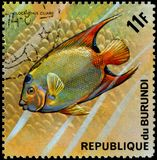 REPUBLIC OF BURUNDI - CIRCA 1974: postage stamp, printed in Burundi, shows a fish Queen Angelfish Holocanthus ciliaris. REPUBLIC OF BURUNDI - CIRCA 1974: a Royalty Free Stock Photography