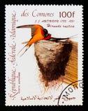 Republic of Comoros postage stamp shows Barn Swallow Hirundo rustica, Audubon Bicentenary serie, circa 1985 Royalty Free Stock Photography