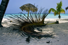 Republica dominicana  beach Royalty Free Stock Images