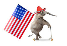 Republican elephant. Royalty Free Stock Image