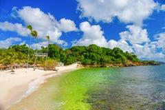 Republika Dominikańska Piaskowata plaża wyspa Cayo Levant Obrazy Royalty Free