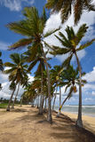 Republika Dominikańska, Punta Cana Obraz Stock