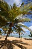 Republika Dominikańska, Punta Cana Obraz Royalty Free