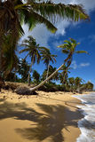 Republika Dominikańska, Punta Cana Obrazy Royalty Free