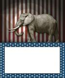 Republikansk elefant Arkivfoton