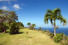 Republiken Trinidad och Tobago - Tobago ö - Castara fjärd och blommor - karibiskt hav Royaltyfri Fotografi