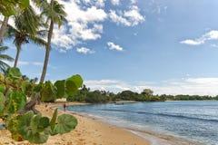 Republiken Trinidad och Tobago - Tobago ö - Mt Irvine fjärd - tropisk strand av det karibiska havet Arkivbilder