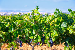 Requena in Valencia province a wine region of Spain Royalty Free Stock Photo
