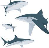 Requin Image libre de droits