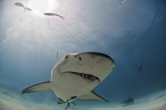Requin bizarre Photo stock
