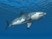 Requin blanc grand Illustration Stock
