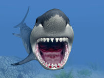 Requin blanc grand illustration stock