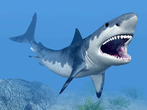 Requin blanc grand illustration libre de droits