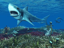 Requin blanc grand Photos libres de droits