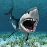 Requin blanc grand illustration de vecteur