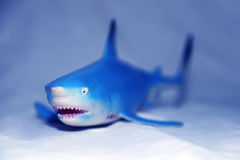 Requin bleu images stock