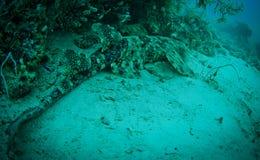 Requin chassant une prière Photographie stock libre de droits
