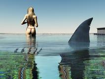 Requin dans la piscine Photo libre de droits