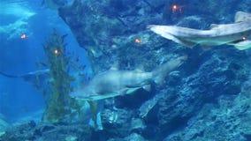 Requin de coraux et d'autres poissons de mer banque de vidéos
