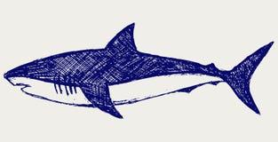 Requin de récif Images stock