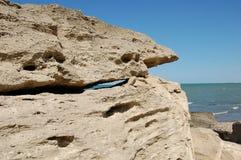 Requin en pierre Image stock