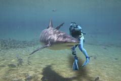 Requin entourant Photos stock