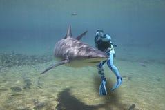 Requin entourant Photos stock