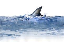 Requin (série C) Images libres de droits