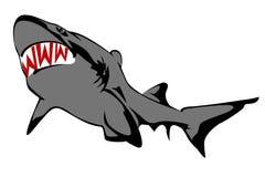 Requin sur un fond blanc Photographie stock libre de droits