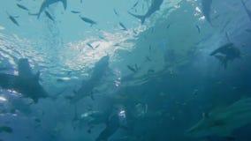 requins banque de vidéos