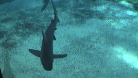 Requins 2 banque de vidéos