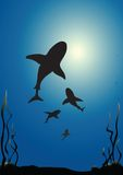 requins illustration de vecteur